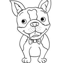 220x220 Smiling Dog Coloring Pages