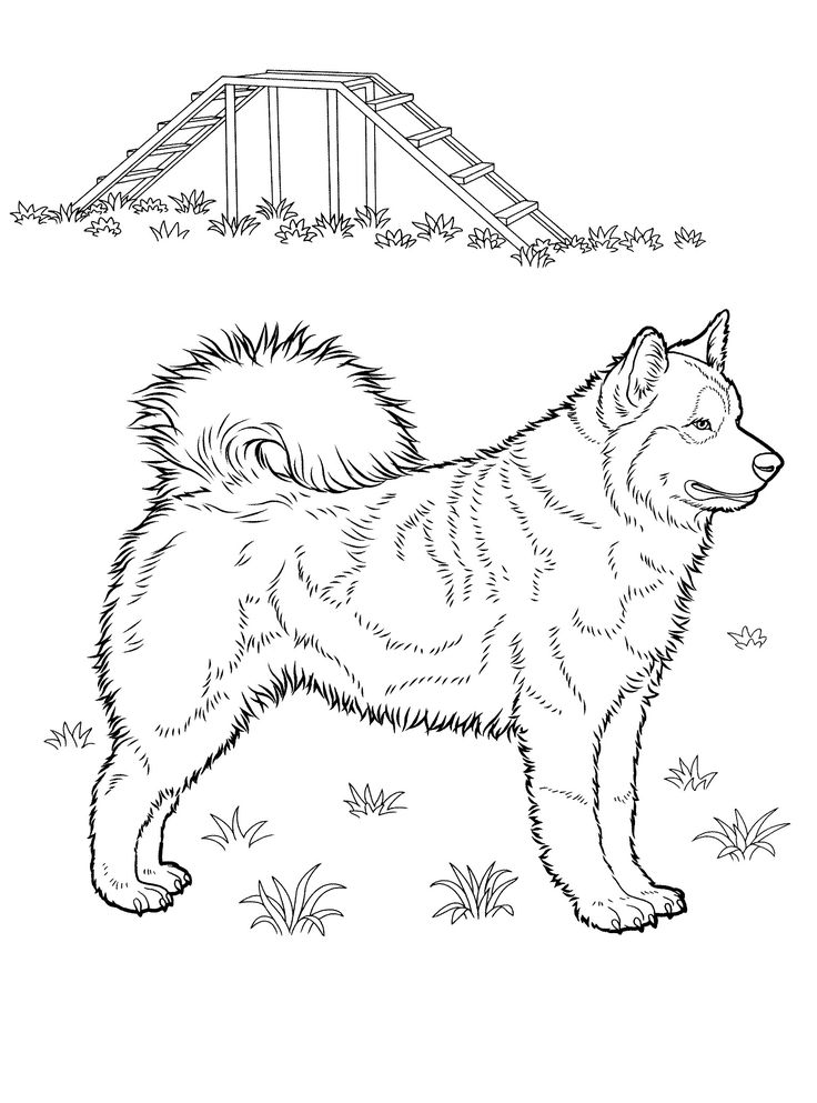 736x993 Best Dog Coloring Pages Images On Coloring Books