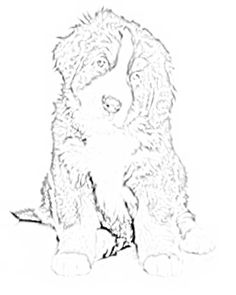 236x295 Bernese Mountain Dog Coloring Page Crafts Bernese