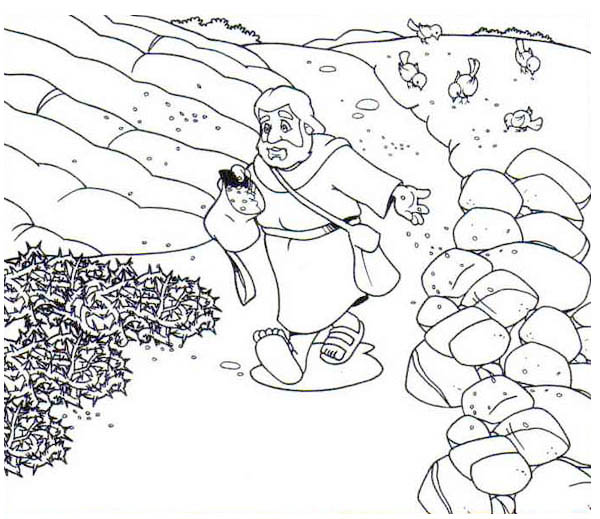 600x519 Scattering Seed Into Rock Places In Parable Of The Sower Coloring