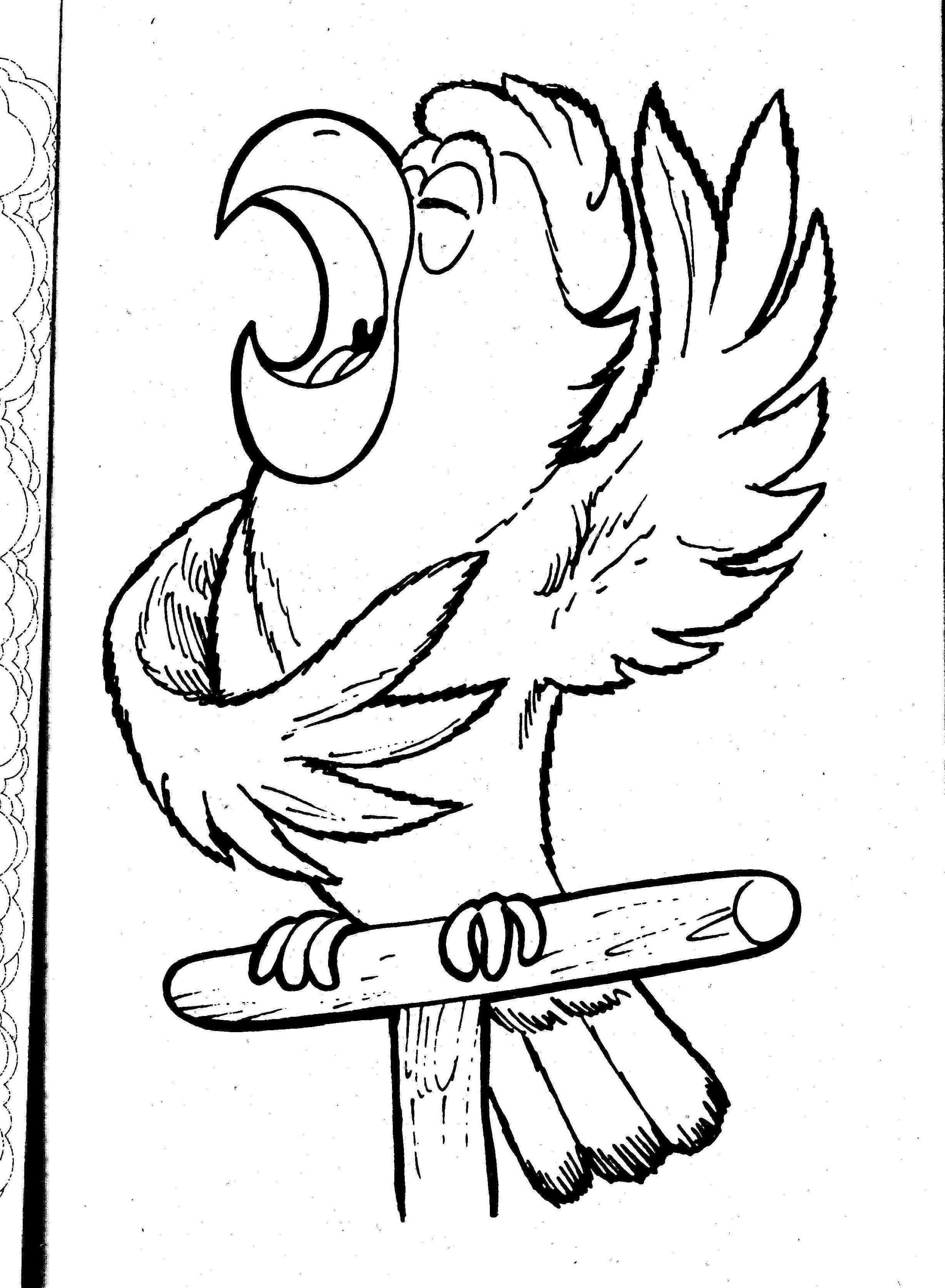 Parrot Bird Coloring Pages At Getdrawings Com Free For