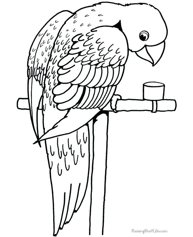 Parrot Bird Coloring Pages At Getdrawings Com Free For Personal