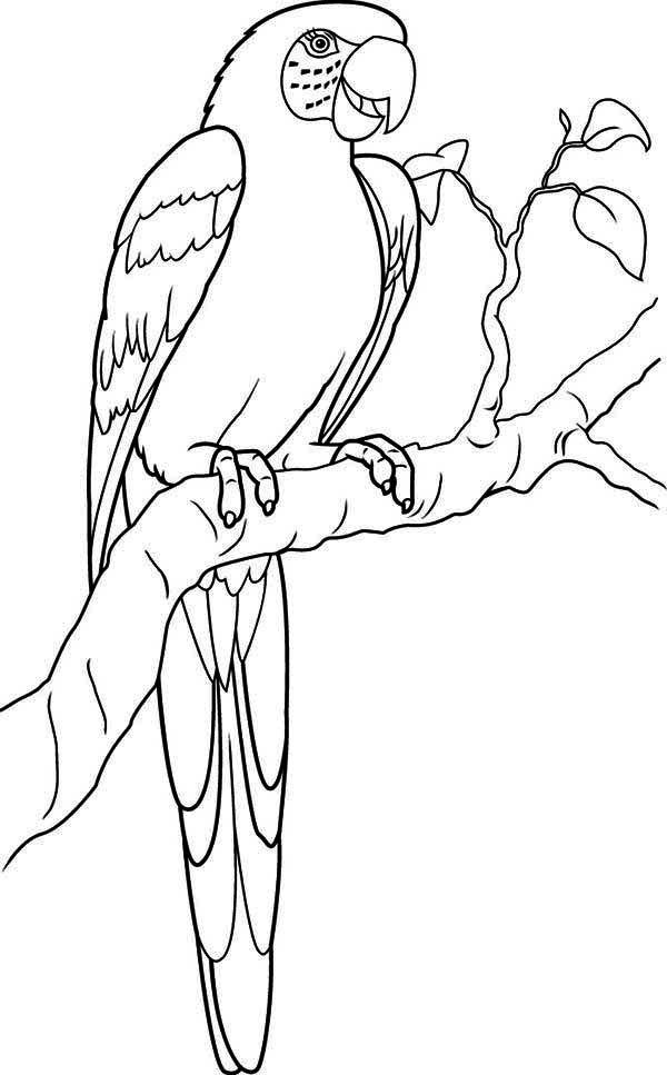 600x967 Lovely Parrot Coloring Page
