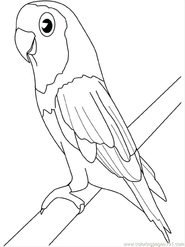 650x866 Macaw Parrot Coloring Page Birds Black White Hand Drawn Doodle