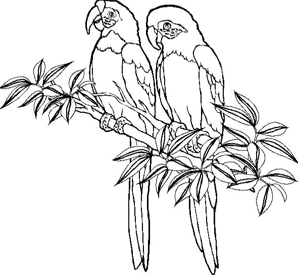 590x546 Parrot Coloring Page Animal Coloring Page