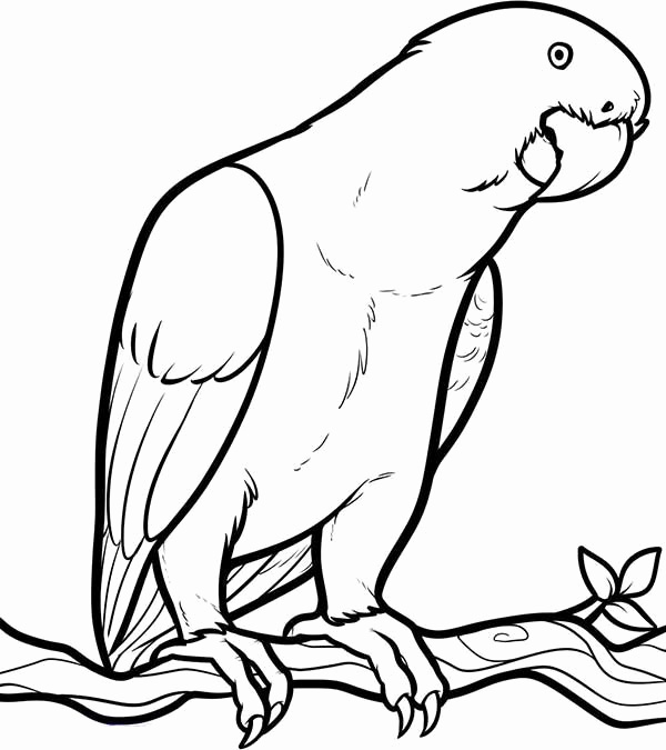 600x675 Parrot Coloring Pages Awesome Parrot Looking For Food Coloring
