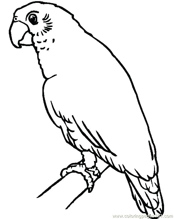 612x770 Parrot Coloring Sheet Parrot Coloring Page Parrot Colouring Pages