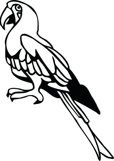 478x674 Parrot Pictures For Kids To Color Birds Grey Parrot Coloring Pages