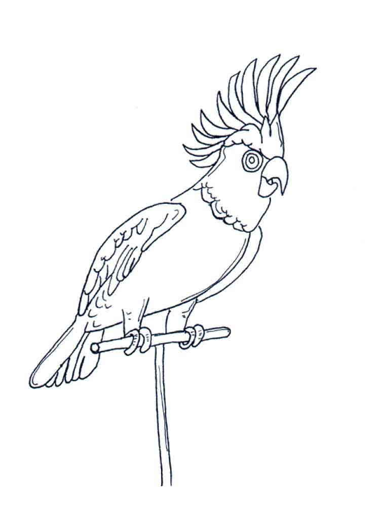 750x1000 Parrot Coloring Pages Download And Print Parrot Coloring Pages