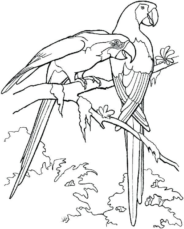 600x746 Parrots Coloring Pages Parrot Coloring Page Coloring Page Animal