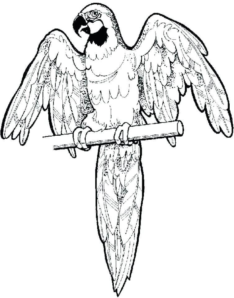 754x960 Parrots Coloring Pages Parrot Coloring Page Free Pages To Print
