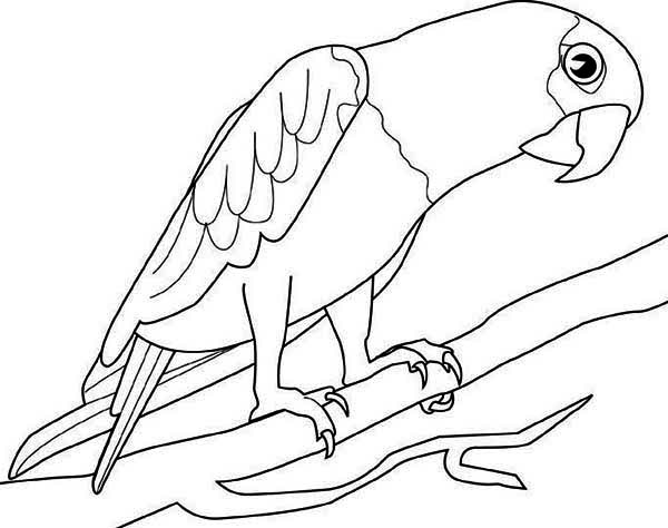 600x474 Big Parrot Coloring Page