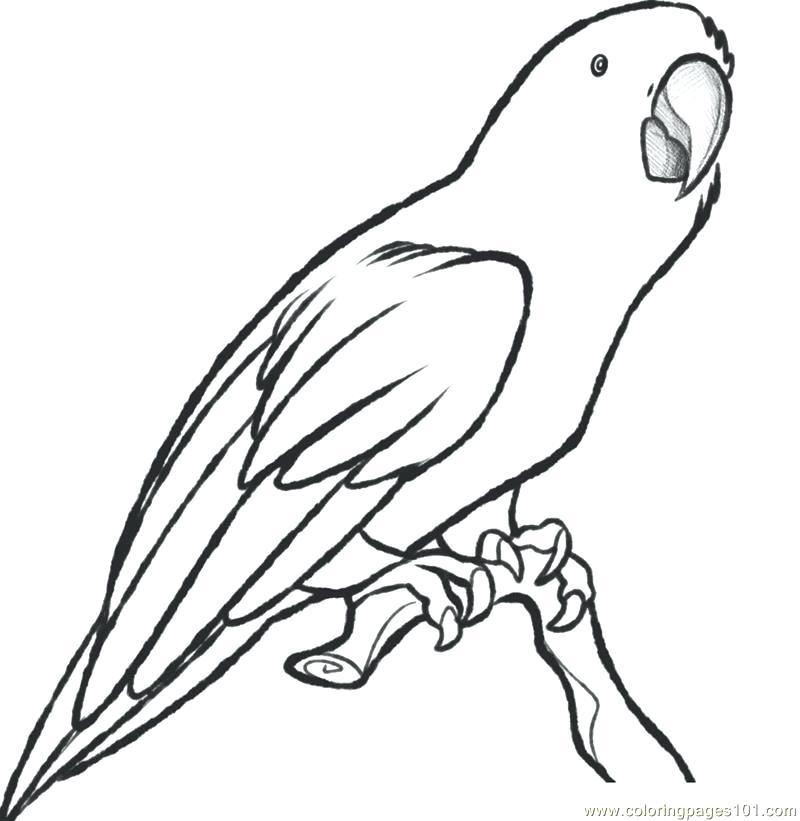 800x821 Parrots Coloring Pages Parrot Coloring Page Parrots Colouring