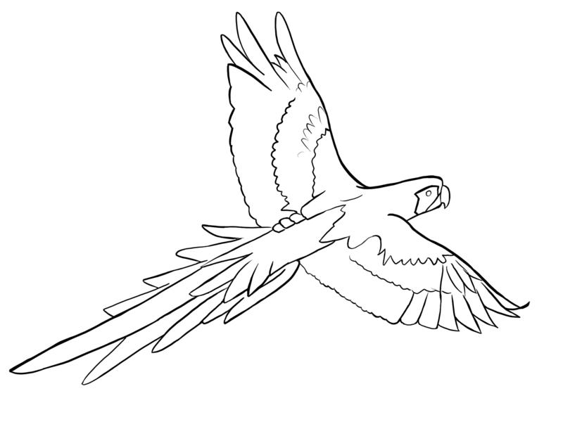 800x600 Parrots Coloring Sheet Outline, Parrot Drawing Outline Coloring