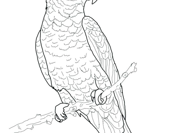 728x535 Printable Coloring Book Images Printable Coloring Parrot Coloring