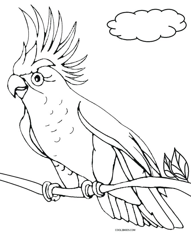 668x819 Printable Parrot Coloring Pages For Kids Birds Printable Parrot