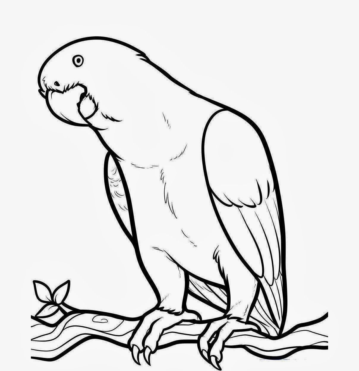 1208x1246 Reward Cute Parrot Coloring Pages Free Printable For Kids