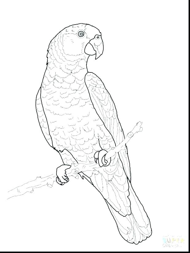 618x824 Parrot Coloring Page