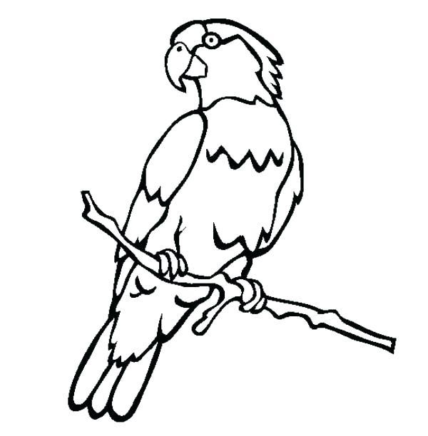 600x612 Coloring Pages Of Parrots Coloring Pages Of Parrots Male Parrot