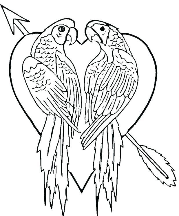 618x745 Coloring Pages Of Parrots Parrot Coloring Page Parrot Coloring