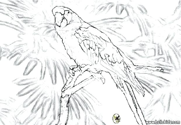 620x427 Coloring Pages Of Parrots Parrot Coloring Pages Printable