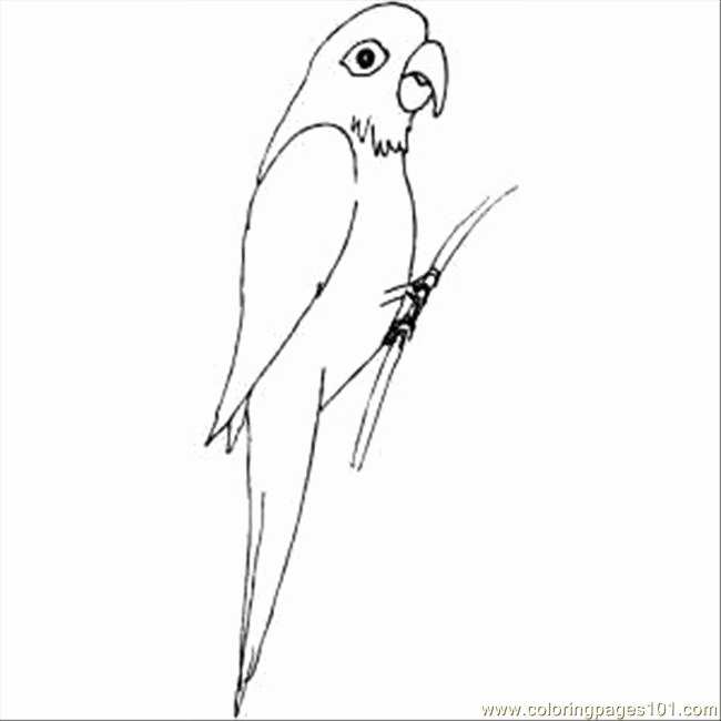 650x650 Free Printable Parrot Coloring Pages Collection Coloring
