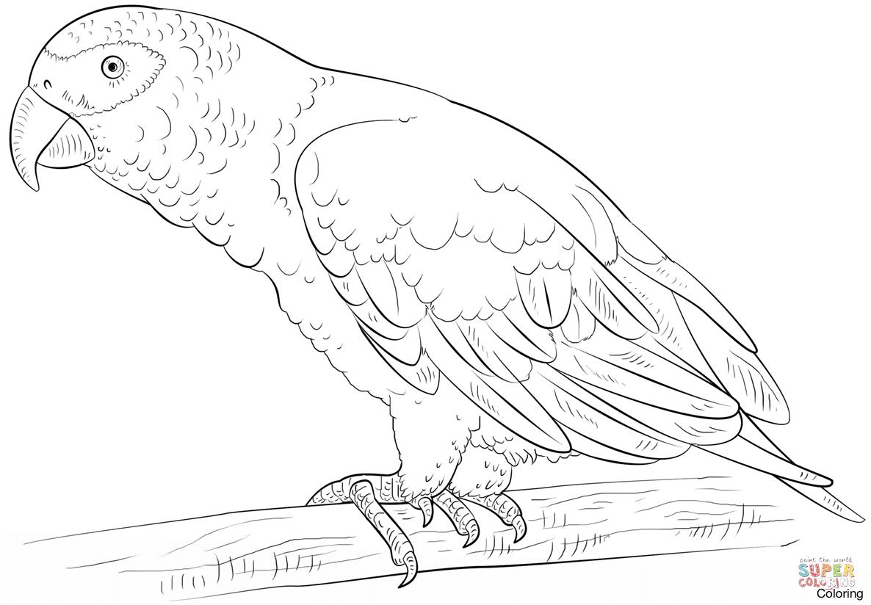 1186x824 Largest Parrot Colouring Pages Coloring Of Par