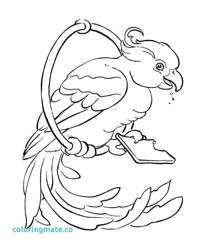 650x796 Parrot Coloring Pages Parrot Outline Coloring Pages Of Parrot