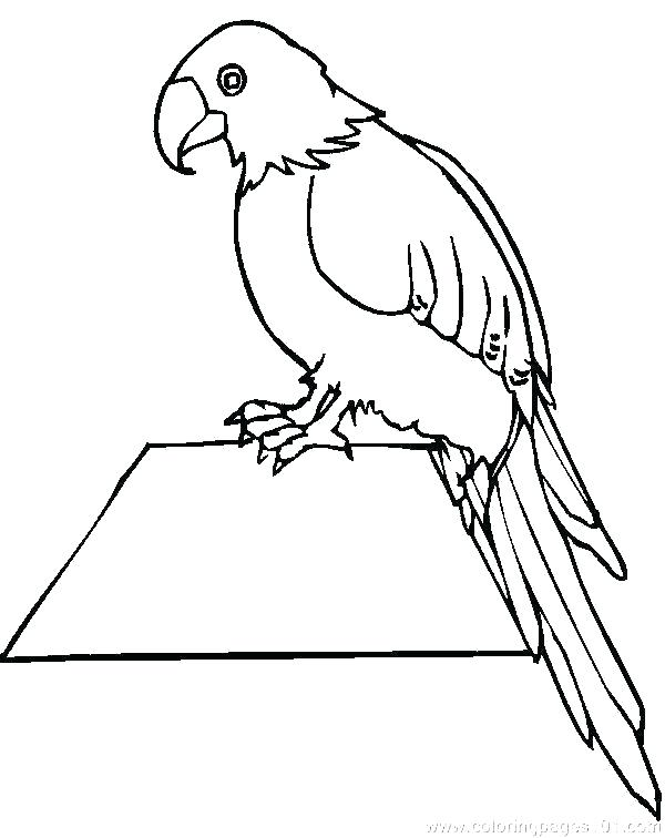 600x756 Parrot Coloring Page Cockatoo Parrot Coloring Pages Parrot Fish