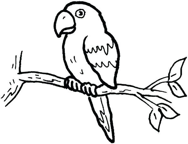 600x461 Parrot Coloring Page Little Parrot Coloring Page Parrot Fish