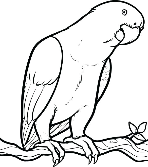 600x675 Parrot Coloring Page New Parrot Coloring Pages Sheets Looking