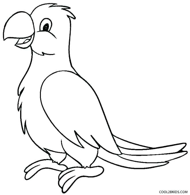 660x675 Parrot Coloring Page Parrot Coloring Sheet Parrot Fish Coloring