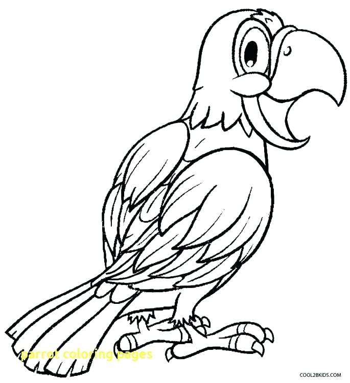 685x750 Parrots Coloring Pages Coloring Pages Of Parrots Parrot Coloring