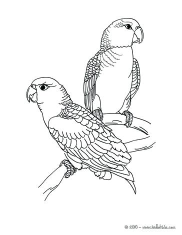364x470 Scarlet Macaw Coloring Page Coloring Pages Of Parrot Fish Online