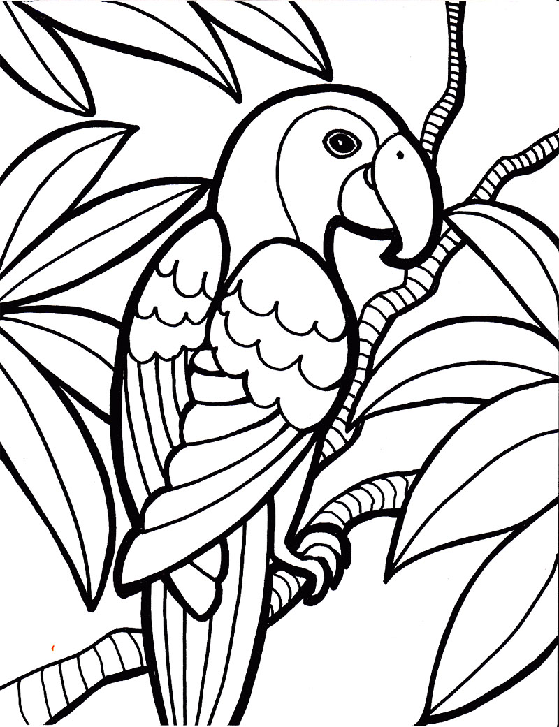 800x1041 Sturdy Parrot Colouring Pages Bird Coloring Page Kids