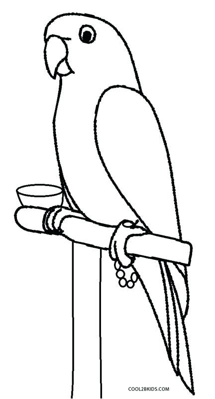 432x800 Coloring Pages Parrot