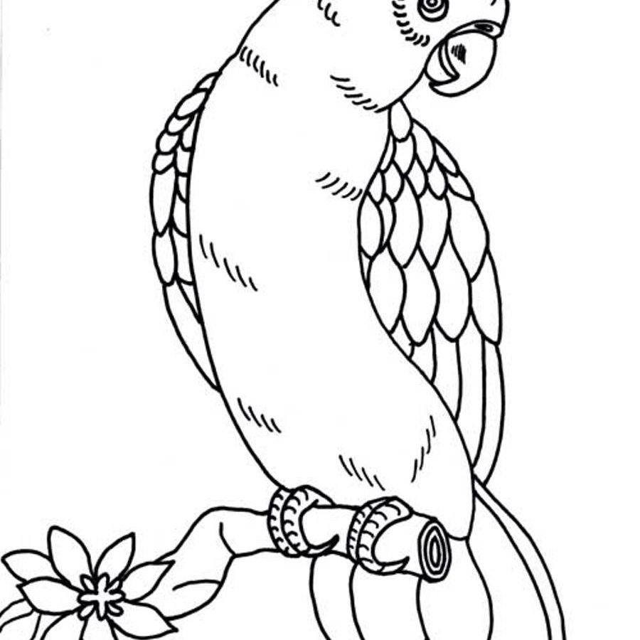 900x900 Download Coloring Pages Parrot Page Printable Me Free Book