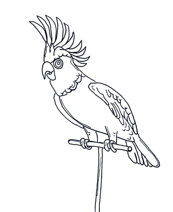 600x733 Parrot Coloring Page Awesome Parrot Coloring Page Parrot Fish
