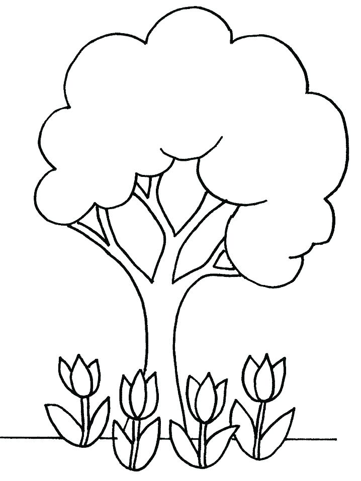 718x957 Parts Of A Plant Coloring Page Parts Of A Plant Coloring Pages