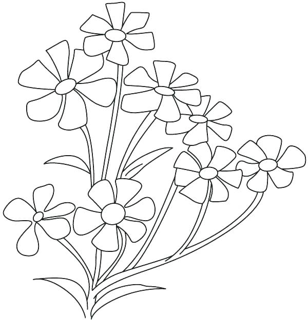 600x625 Parts Of A Plant Coloring Page Parts Of Plants Song Grade Teaching