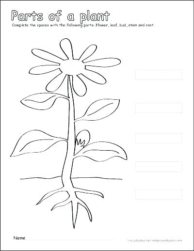 400x518 And Photosynthesis Coloring Page Photosynthesis Coloring Diagram