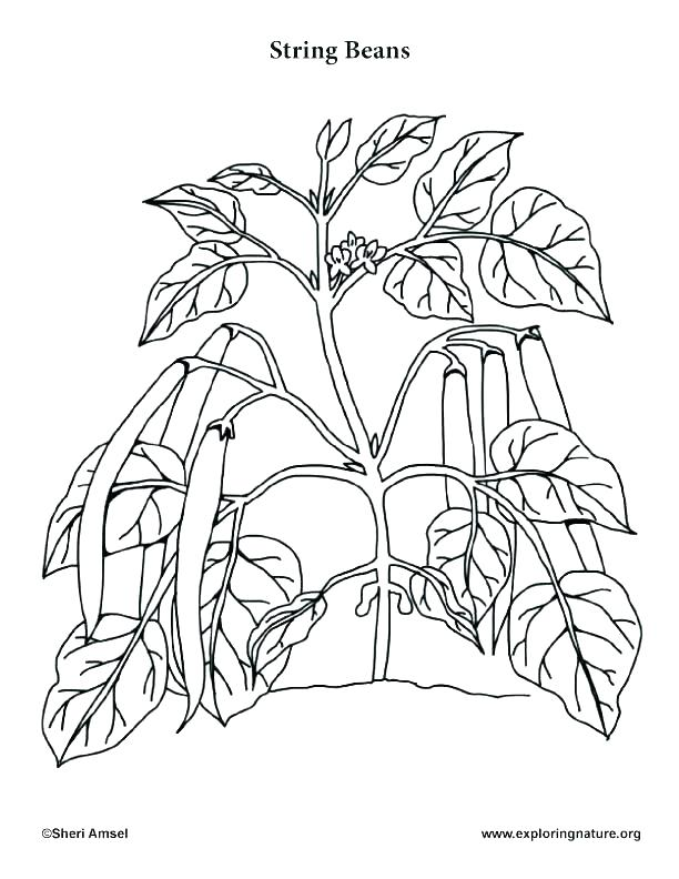 612x792 Parts Of A Plant Coloring Page Plant Plant Parts Coloring Sheets