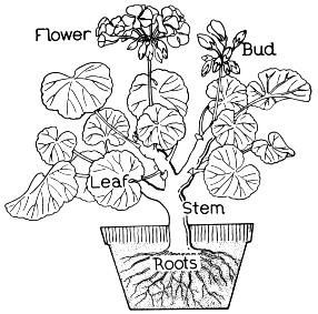286x283 Plant Coloring Pages Education Tools Plants