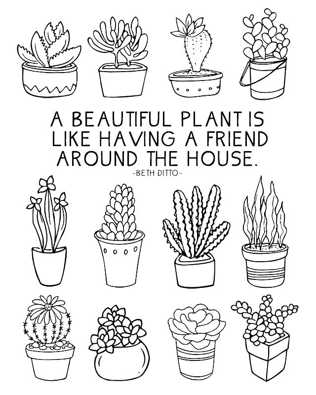640x800 Plant Coloring Pages Plant Cell Parts Coloring Page Plants Pages