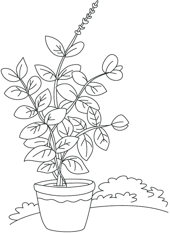 576x789 Plant Coloring Parts Of A Plant Coloring Page Label The Parts