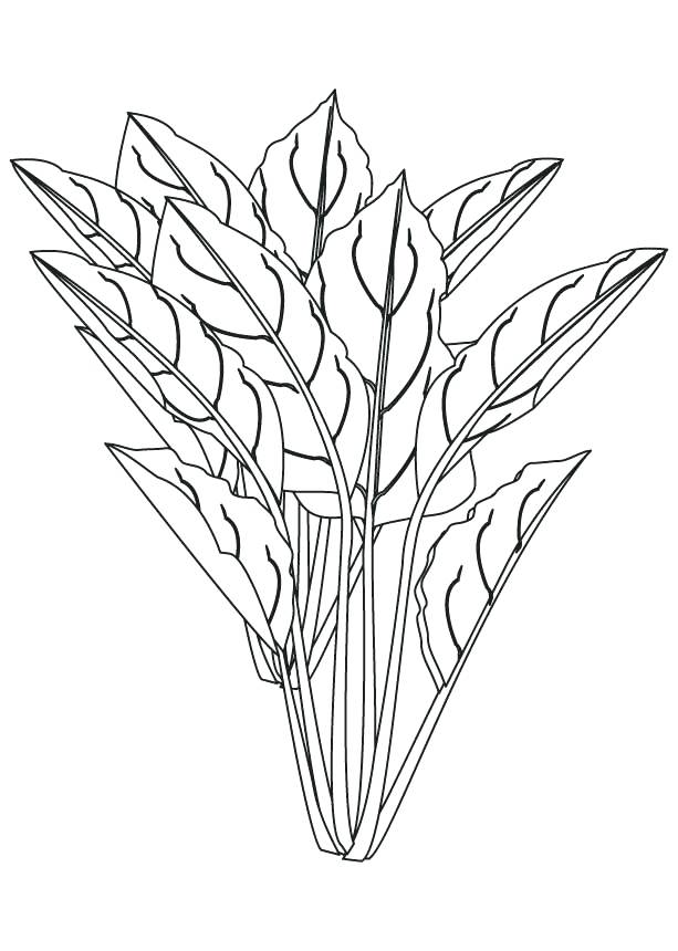 613x860 Spinach Coloring Spinach Coloring Page On Parts Of A Plant