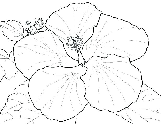 618x477 Parts Of A Flower Coloring Page