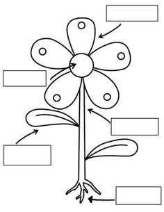 236x305 Download Plant Parts Coloring Pages And Activities