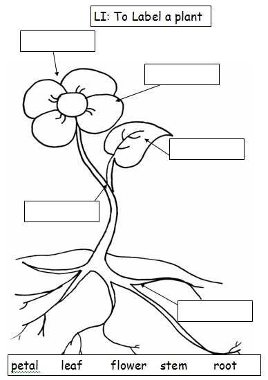 388x549 I Used This Along With Teaching Functions Of A Plant To Ensure