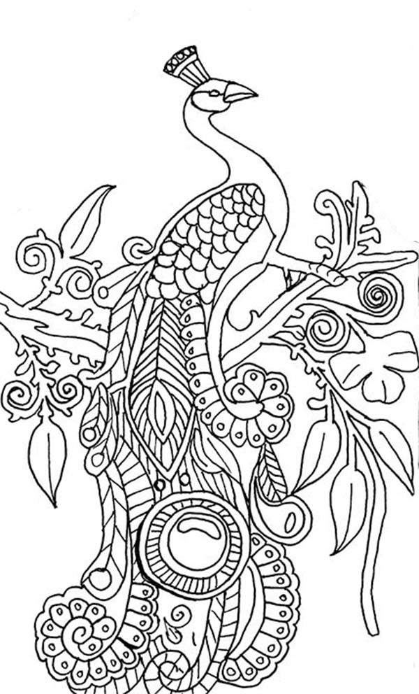 600x992 Peacock Coloring Page